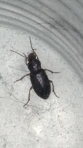 käfer die meistgelesenen fragen