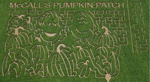 Mccalls Pumpkin Patch Albuquerque Nm by Mcalls Pumpkin Patch