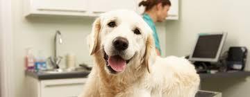 burke animal clinic davies animal hospital yuba city yuba city veterinarian
