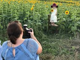 Pumpkin Patches Around Manhattan Ks by 7 Things To Know Before You Visit Grinter Farms U0027 Sea Of Sunflowers