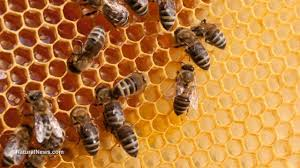 organic agriculture is helping save bees from extinction