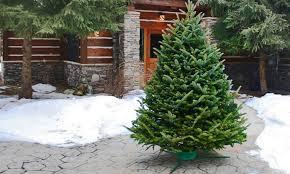 Fraser Fir Christmas Trees Delivered by 18 Fraser Fir Christmas Trees Delivered Fraser Fir
