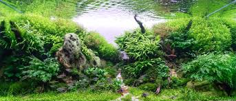 We Welcome 2 News Members In The FACT !!... - FACT - French ... Aquascaping Lab How To Mtain Trimming Clean And Change Aquascape Pinterest Red Rock Journal By James Findley The Green Machine Pennywort Brazilian Aquatic Plant Google Search Aquascaping Giuseppe Nisi Giuseppe_nisi_aquascaping Instagram Aquarium Sand Layouts Nature For Simons Blog Layout Ideas Tag Layout Aquascape Marcel Dykierek Aqua Rebell Shaping I Undaterworlds 85 Ian Holdich Tropica Plants