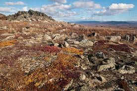 100 Rocky Landscape Autumn Colors Of Tundra On The At Finger Mountain