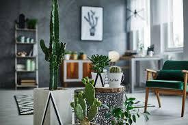 pflanzen als dekoration tipps tricks der