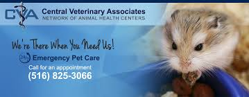 Boulevard Animal Clinic   Forest Hills Veterinary Services   Queens, NY 58 Off Valley Vet Coupon Promo Codes Retailmenotcom Oukasinfo Pet Supply Store Sckton Manteca Ca Carters Mart Welcome To Benjipet Sugar House Veterinary Hospital Vetenarian In Salt Lake City Ut Animal Medical Center Of Corona Your Friendly Vet For Your Coupon September 2018 Deals Northstar Vets Home 40 Military Discounts 2019 On Retail Food Travel More Promo Code Free Shipping Edreams Multi City Memorial Day Where Vets And Military Eat Get Discounts Flea Tick Coupons Offers Bayer Petbasics