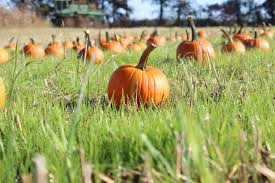 Pumpkin Farms Southern Illinois by Corn Mazes And Pumpkin Patches Virginia Is For Lovers