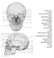 Drawing Anatomy Of Page 1 FileTraffic
