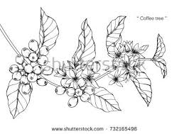 Hand Drawing And Sketch Coffee Tree Black White With Line Art Illustration