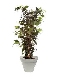 plante d駱olluante bureau 89 best plantes d intérieur avec pots blancs images on
