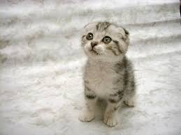 kitty cat kitty cat information about cats so fierce thinglink