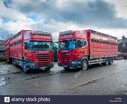 100 Cattle Truck For Sale Market Trucks Waiting To Load Animals Sold At A Livestock