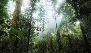 dubai woodshow renews 5 year partnership with european federation