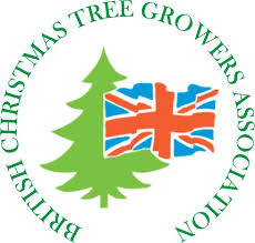 Best Christmas Tree Type Uk by Christmas Trees Newlands Nursery And Garden Centre At Ide Hill
