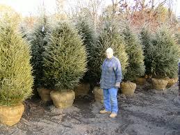 Winterberry Christmas Tree Farm Pa by Highland Hill Farm