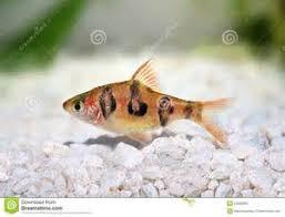 poisson eau douce aquarium tropical aquarium pour poissons tropicaux liste de poissons d aquarium