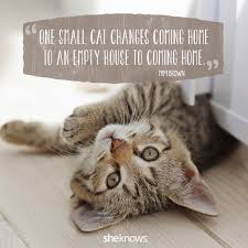cat quotes best friends fur