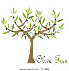 Olive tree with black olives Vector illustration
