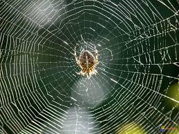 comment fait l araignée pour ne pas se coller à sa toile knowtex