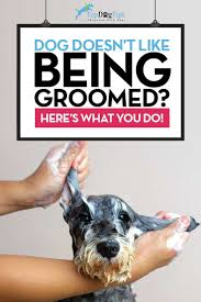 Conair Pro Dog Shedding Blade by Best 25 Dog Grooming Tips Ideas On Pinterest Dog Grooming Dog