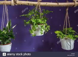 anordnung der hängende blumentöpfe mit grünen haus pflanzen