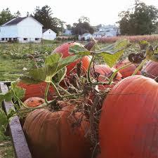 Heather Farms Pumpkin Patch by Pumpkin Head Pumpkin Patch Home Facebook