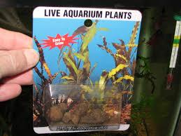 aquarium plant bulbs 1000 aquarium ideas