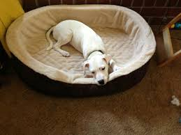 Petco Dog Beds by Important To Look For In An Orthopedic Dog Bed Invisibleinkradio