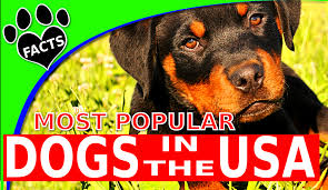 Dogs That Shed Minimally by Animal Facts U2013 Page 2 U2013 Amazing Facts And Top 10s From The Animal