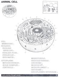 Stunning Idea Animal Cell Coloring Page Answers Key Printable Full Size