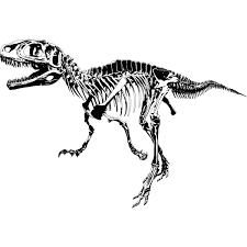 T Rex Skeleton Rex Skeleton Dinosaurs Wall Art Sticker Wall Decal