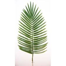 prix des palmiers exterieur the world s catalog of ideas