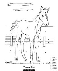 Horse Color By Number