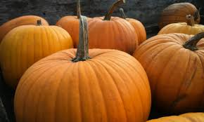 Pumpkin Patch Homer Glen Il by Pumpkin Patches Chicago Orland Park Il