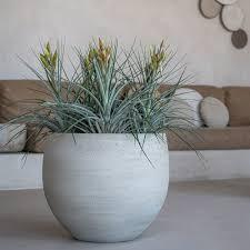 pflanzkübel orb cement pottery pots lisel de
