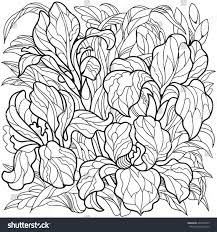 Iris Flowers Coloring Page For Adult And Older Children