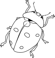 Nice Insects Coloring Pages Cool Gallery KIDS Downloads Ideas