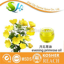 oenothera biennis evening primrose oil oenothera biennis evening