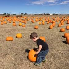 Pumpkin Patches Near Colorado Springs Co by Wishing Star Farm 34 Photos Kids Activities 24024 Hwy 94
