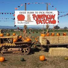 South San Jose Pumpkin Patch by Giordano Farms Closed 125 Photos U0026 29 Reviews Fruits
