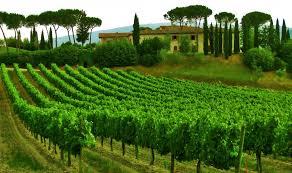 Italy Tuscany Sky Tree House Vineyard