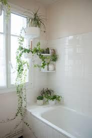 17 pflanzen im badezimmer ideen pflanzen im badezimmer
