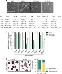 The Poly b group protein CBX6 is an essential regulator of