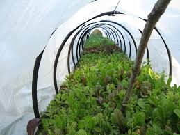 Our Subsistence Pattern: Rambling Thoughts And Speculation On ... 484 Best Gardening Ideas Images On Pinterest Garden Tips Best 25 Winter Greenhouse Ideas Vegetables Seed Saving Caleb Warnock 9781462113422 Amazoncom Books Small Patio Urban Backyard Slide Landscaping Designs Renaissance With Greenhouse Design Pafighting Fall Lawn Uamp Gardening The Year Round Harvest Trending Vegetable This Is What Buy Vegetables Fresh And Simple In Any Plants Home Ipirations