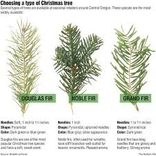 Kinds Of Christmas Trees by Christmas Christmas Tree Species Img 3970 List Southern Il Oh