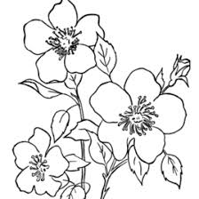 Spring Flower Coloring Pages Printable Trendy Inspiration Free
