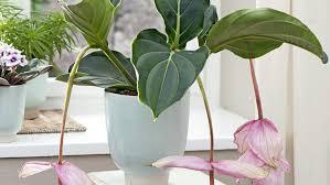 plante dans chambre à coucher quelle plante verte pour quelle pièce de la maison femmes d