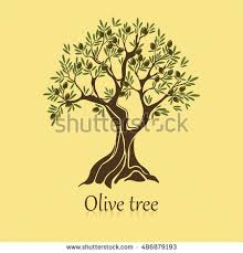 Natural olive tree with branches for bottle sticker Organic ve able drink label Olea oil