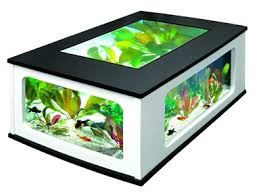 fondre aquarium dans intérieur http www zoomalia