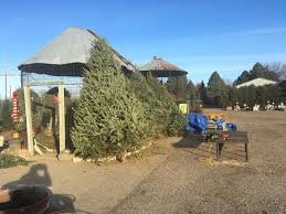 What Is The Best Christmas Tree Variety by Christmas Trees U2014 The Mustard Seed